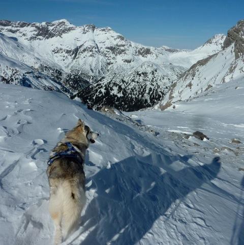 Foto: Thomas Höllwarth / Ski Tour / Mehlsack, 2651m / 29.01.2012 21:07:05