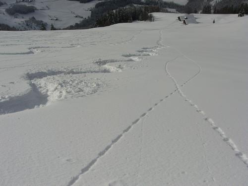 Foto: hofchri / Skitour / Eibleck, 1518m / 22.12.2008 19:04:16