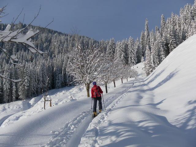 Foto: Wolfgang Lauschensky / Ski Tour / Grinnköpfl (1707m) / Wintertraum am kurzen Güterweg / 18.12.2011 20:58:10