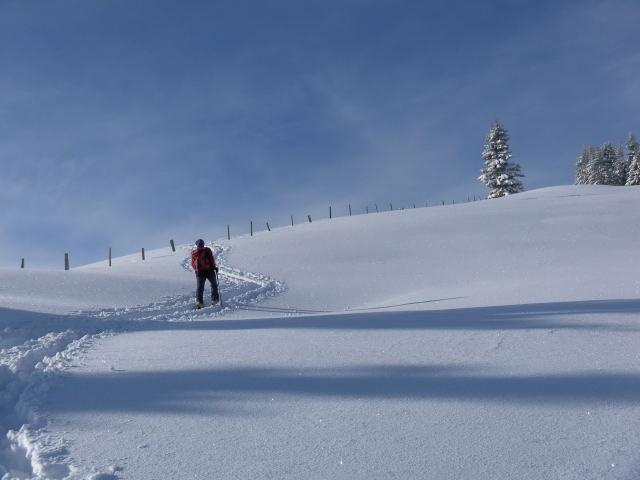 Foto: Wolfgang Lauschensky / Ski Tour / Grinnköpfl (1707m) / am Gipfelrücken / 18.12.2011 20:57:33