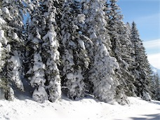 Foto: ksc / Ski Tour / Von Gosau auf den Hoch Kalmberg, 1833m / 30.01.2011 13:30:05