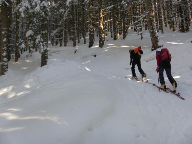 Foto: Wolfgang Lauschensky / Ski Tour / Zirmkogel (2215m) / Almweg durch den Hochwald / 12.02.2013 17:01:16
