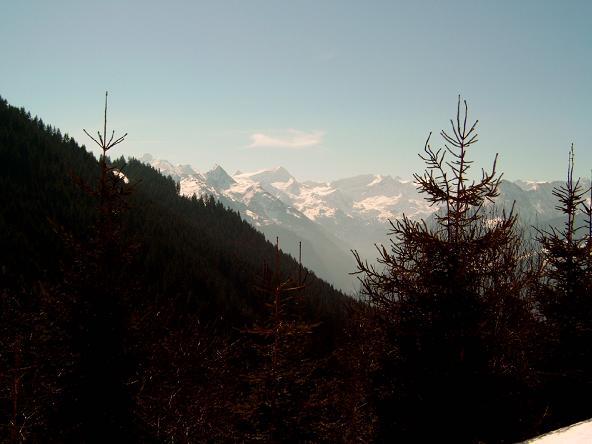Foto: Andreas Koller / Ski Tour / Geißstein (2363m) / 27.01.2009 21:58:06