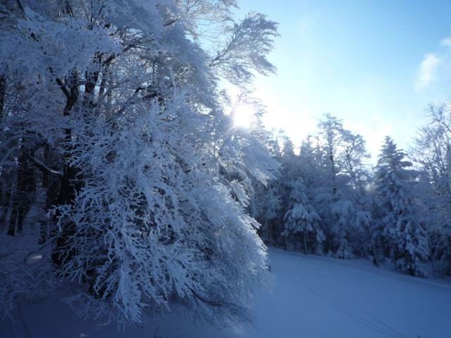 Foto: Thomas Höllwarth / Ski Tour / Über den Muckenkogel auf die Hinteralm (1311m) / 28.02.2009 22:18:11