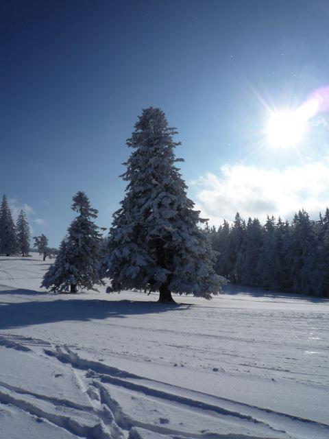 Foto: Thomas Höllwarth / Ski Tour / Über den Muckenkogel auf die Hinteralm (1311m) / 28.02.2009 22:18:23