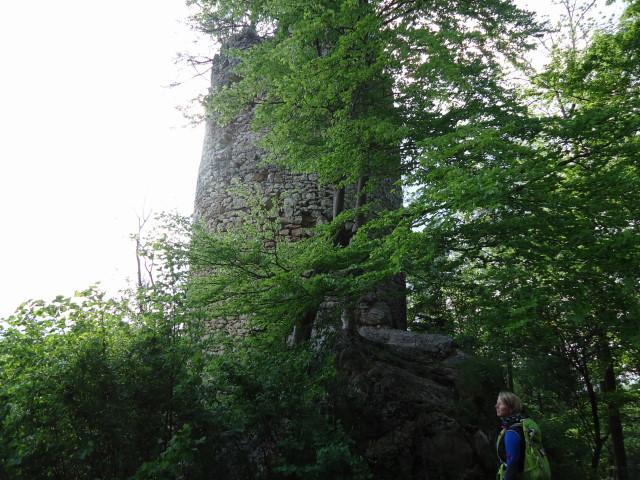 Foto: Günter Siegl / Wander Tour / Hirschwaldstein (1095m) / 18.05.2012 11:29:13