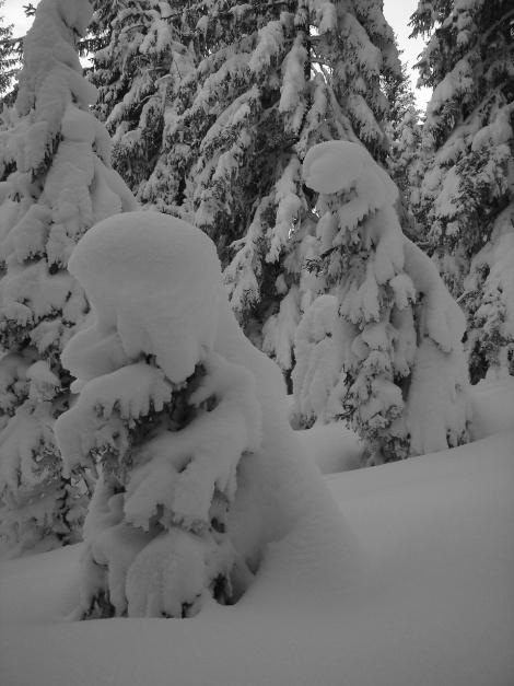 Foto: Manfred Karl / Rodeltour / Toter Mann (1391m) / 18.12.2008 12:32:01