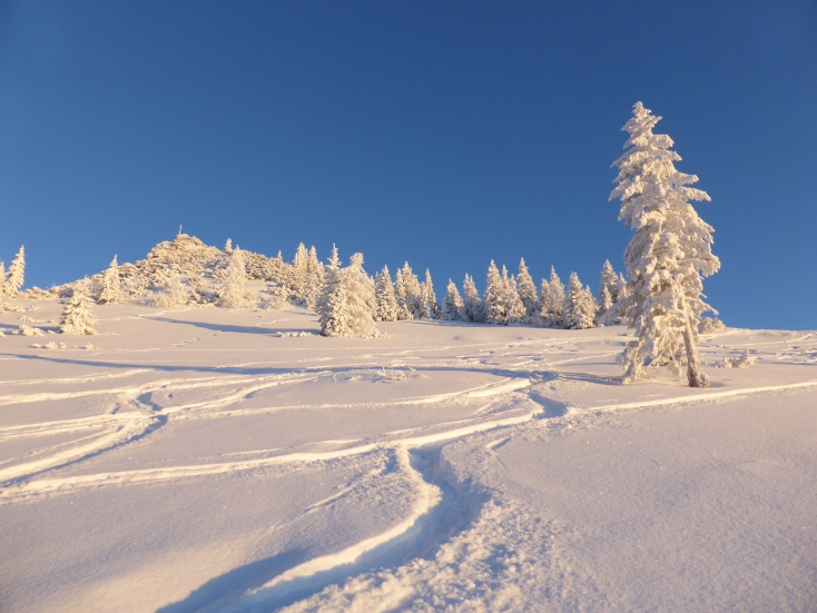 Foto: Manfred Karl / Ski Tour / Peitingköpfl (1720m) / 18.03.2015 20:18:51