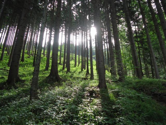 Foto: Günter Siegl / Wander Tour / Von Scharnstein auf den Hochsalm / 07.06.2012 21:13:06