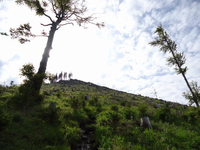 Foto: Günter Siegl / Wander Tour / Von Scharnstein auf den Hochsalm / Gipfelaufbau / 07.06.2012 21:11:38