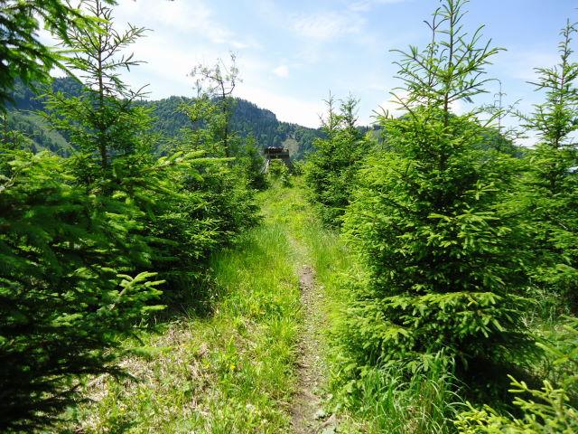Foto: Günter Siegl / Wander Tour / Von Scharnstein auf den Hochsalm / 07.06.2012 21:12:17
