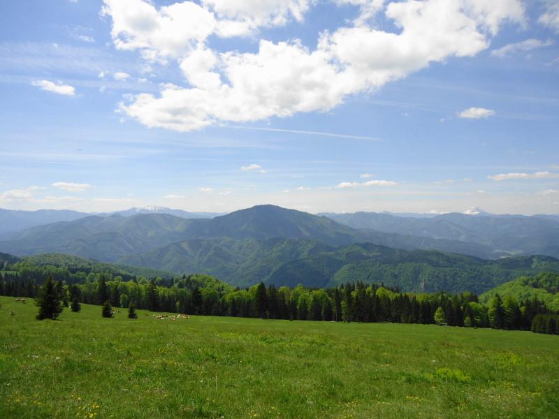 Foto: Günter Siegl / Wander Tour / Reisalpe Hinteralm überschreitung / Blick zum Türnitzer Höger / 29.05.2014 09:00:10