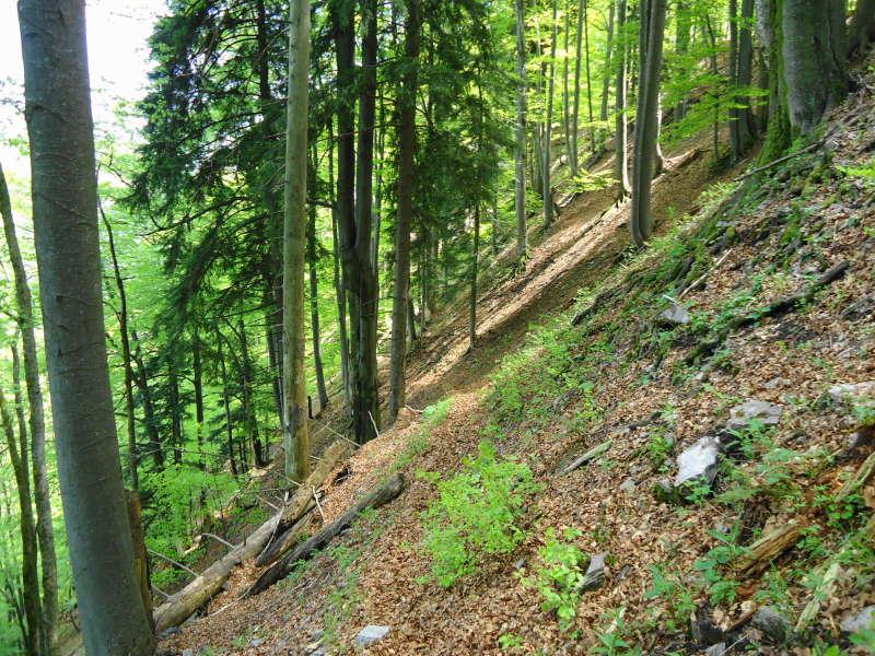 Foto: Günter Siegl / Wander Tour / Reisalpe Hinteralm überschreitung / 29.05.2014 08:59:08