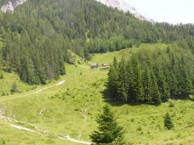 Foto: skisprungschanze.com / Wander Tour / Vom Einsiedler zur Steinalm / Weg zur Steinalm, waldfrei, leicht bergan / 01.08.2009 17:17:04