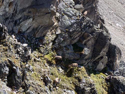 Foto: vince 51 / Wander Tour / Rundtour in der Silvretta / Familie Steinbock / 04.11.2007 20:58:43
