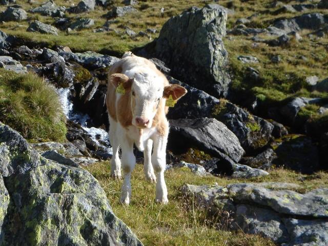 Foto: berglerin / Wander Tour / Durch das Debanttal auf den Glödis 3206m / 01.08.2009 14:44:04