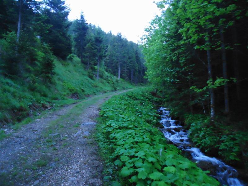 Foto: Günter Siegl / Wander Tour / Durch den Ohrwaschelgraben auf den Hochwechsel / Ohrwaschlgraben / 10.06.2015 14:18:32