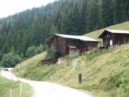 Foto: GeriAut / Mountainbike Tour / Wildkogeltrail / Kühe auf dem Weg - keine Seltenheit - aktuelle Meereshöhe 1340m / 28.07.2011 20:53:16