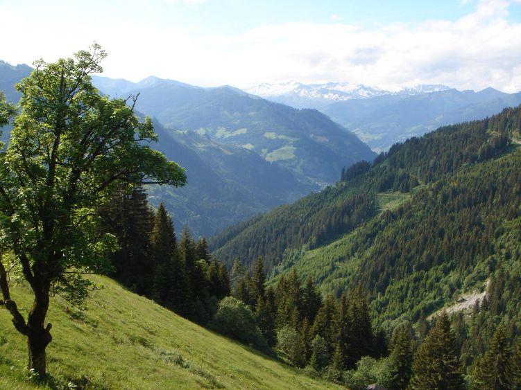 Foto: Manfred Karl / Wander Tour / Höllwand / Bei der Mooslehenalm / 03.06.2008 15:54:16