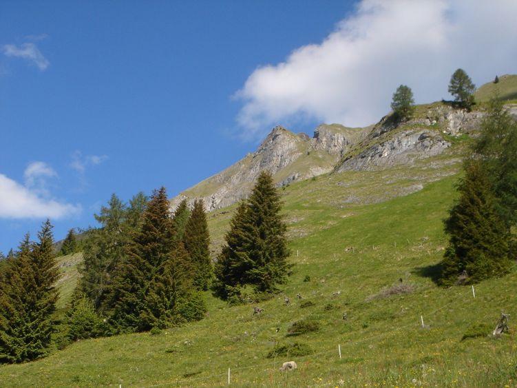 Foto: Manfred Karl / Wander Tour / Höllwand / Nach der Mooslehenalm / 03.06.2008 15:53:52