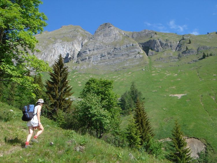 Foto: Manfred Karl / Wander Tour / Höllwand / Nach der Abzweigung vom Fahrweg / 03.06.2008 15:52:34