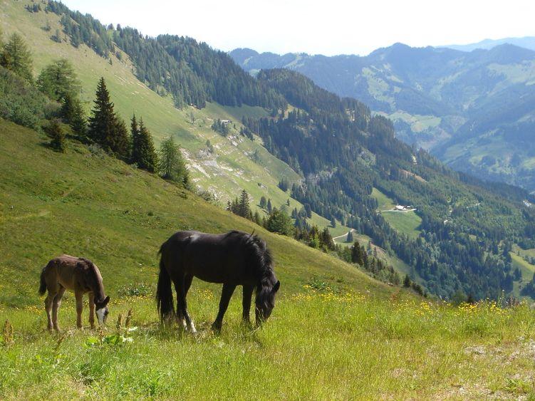 Foto: Manfred Karl / Wander Tour / Höllwand / Pferdeweide bei der Schied-Hochalm / 03.06.2008 15:51:04