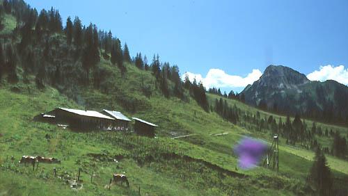 Foto: Kloiber Gabi / Wander Tour / Rundwanderung Ellmautal-Almensteig von Alm zu Alm / Loosbühelalm, 1.769 m / 28.05.2008 09:55:56