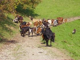 Foto: Romana Koeroesi / Wander Tour / Vom Weingarten auf die Alm: Leutschach – Remschnigg Alm / Copyright: TV Rebenland / 04.05.2009 10:30:57