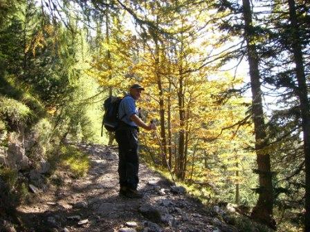 Foto: dobratsch11 / Wander Tour / Jof di Miezegnot (Mittagskofel) 2087m / Durch den Herbstlichen Hochwald. / 24.09.2007 16:55:32