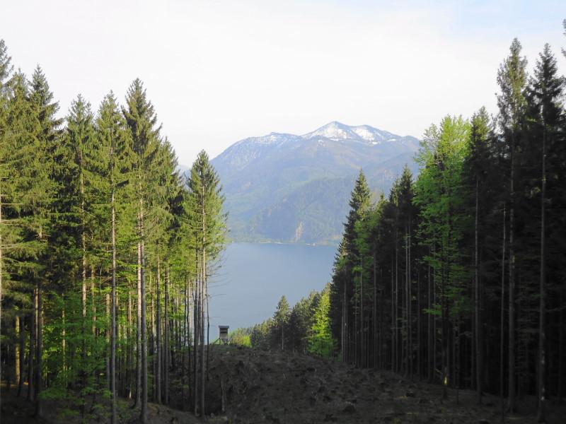 Foto: Günter Siegl / Wander Tour / Der kürzeste Weg auf die Hochplettspitze / Leonsberg / 03.05.2015 18:56:07