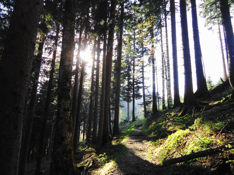 Foto: Günter Siegl / Wander Tour / Der kürzeste Weg auf die Hochplettspitze / 03.05.2015 18:55:38