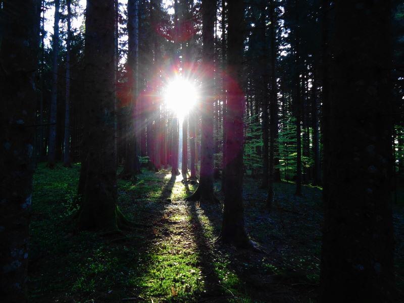 Foto: Günter Siegl / Wander Tour / Der kürzeste Weg auf die Hochplettspitze / 03.05.2015 18:51:05
