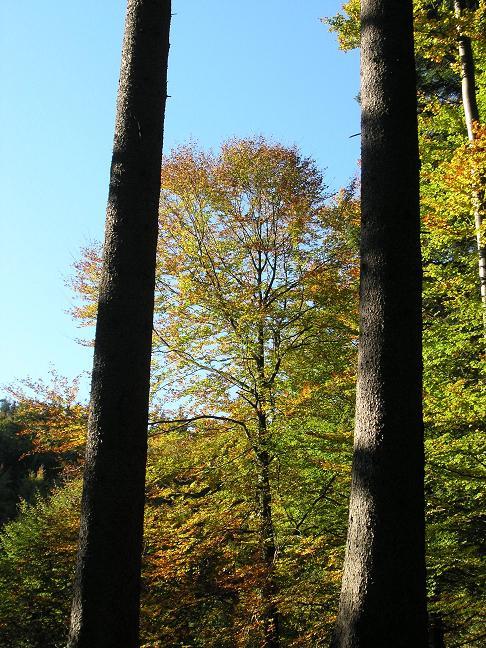 Foto: Benedik Herbert / Wander Tour / Der kürzeste Weg auf die Hochplettspitze / 02.10.2007 19:37:26