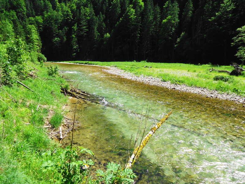 Foto: Günter Siegl / Wander Tour / Von Weichselboden durch den Klausgraben / 20.06.2017 22:51:54