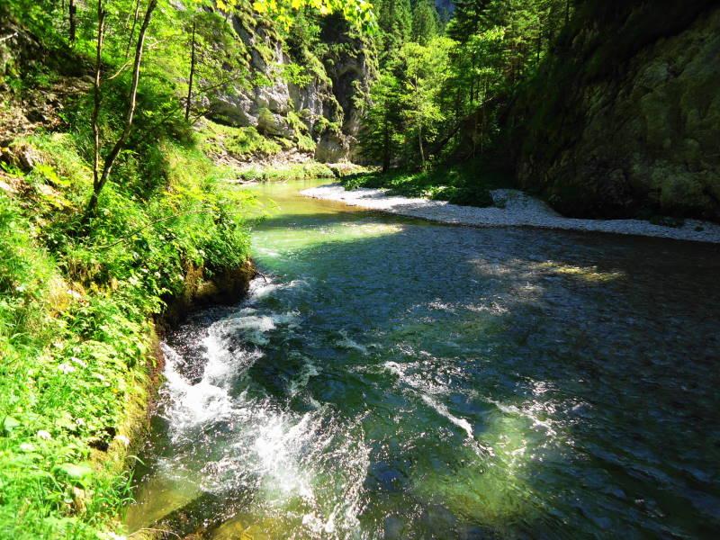 Foto: Günter Siegl / Wander Tour / Von Weichselboden durch den Klausgraben / 20.06.2017 22:50:00
