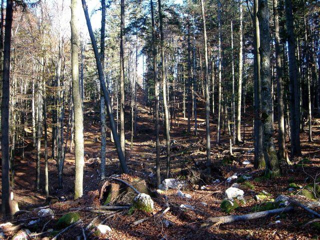 Foto: Manfred Karl / Wander Tour / Über den Hengstberg auf den Mühlstein / Suchspiel: Wo ist er - der Gipfel? / 23.10.2007 19:12:11