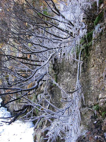 Foto: Andreas Koller / Wander Tour / Lanschitzseen und Hasenhöhe (2446 m) / Eis an den Bäumen unterhalb der Lanschitzseen / 30.10.2007 04:42:33