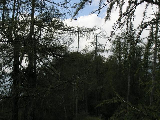 Foto: Benedik Herbert / Wander Tour / Falkenstein und Falkastoal - 2 Gipfel und 3 Seen / die letzten Meter zum Falkenstein / 10.11.2007 12:09:27
