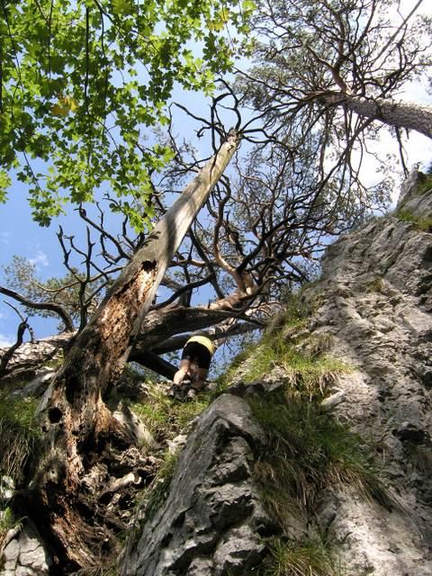 Foto: Benedik Herbert / Wander Tour / Falkenstein und Falkastoal - 2 Gipfel und 3 Seen / Abstieg 2 / 10.11.2007 12:12:20