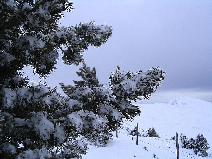Foto: Andreas Koller / Ski Tour / Kreischberger Kammtour (2172m) / Durch Latschen Blick auf das Goldachnock / 11.12.2007 03:14:53