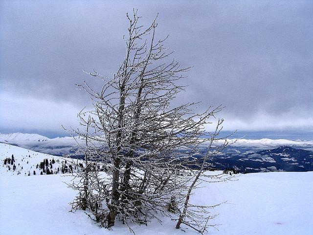 Foto: Andreas Koller / Ski Tour / Kreischberger Kammtour (2172m) / Vom Kirbisch zum Goldachnock / 11.12.2007 03:14:34