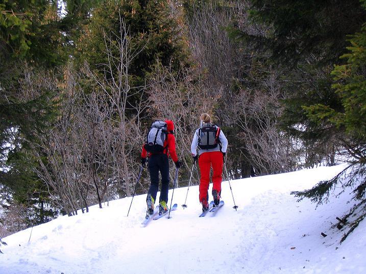 Foto: Andreas Koller / Ski Tour / Zwei Gipfel aus dem Gullinggraben (2196 m) / Schöne Ansichten im Wald ...  / 21.01.2008 15:51:04