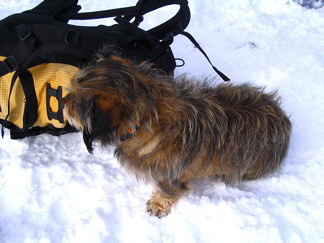 Foto: Andreas Koller / Ski Tour / Zwei Gipfel aus dem Gullinggraben (2196 m) / Auch mit 4 Beinen erklimmt man / hund den Gipfel / 21.01.2008 15:44:21