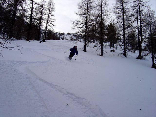 Foto: Manfred Karl / Ski Tour / Über die Schar auf das Viertleck / Im lichten Lärchenwald auf Höhe der Scharhütte / 11.02.2008 06:22:48