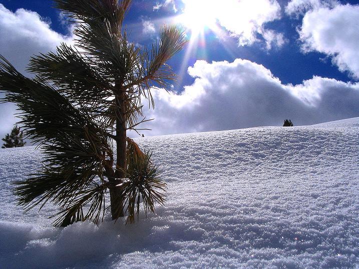 Foto: Andreas Koller / Ski Tour / Von der Turrach auf das Gregerlnock (2296m) / Wunderbare Landschaft in den Nockbergen / 16.03.2008 16:37:57