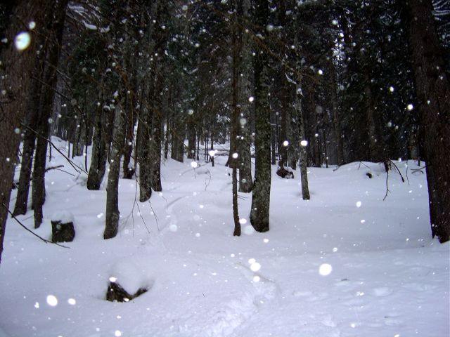 Foto: Manfred Karl / Ski Tour / Jochschrofen (Ornach), 1625 m / Baumslalom / 20.03.2008 19:17:23