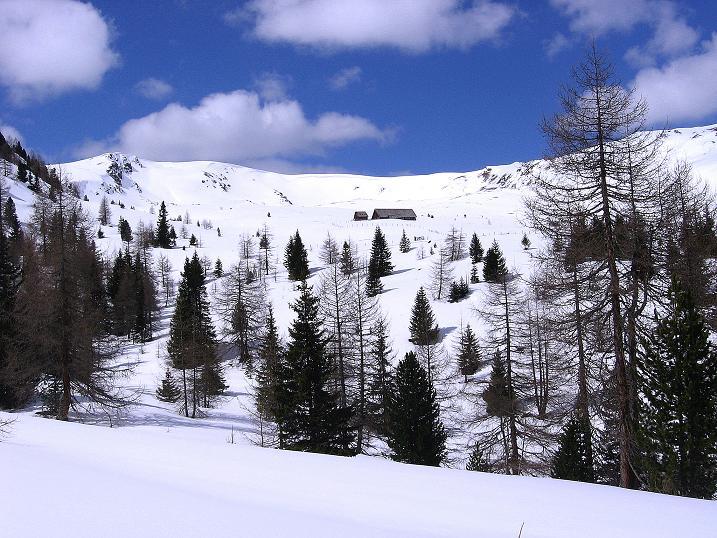 Foto: Andreas Koller / Ski Tour / Vom Bundschuh auf die Schwarzwand (2214 m) / Durch lichten Wald zur Bruggeralm / 06.04.2008 23:48:29