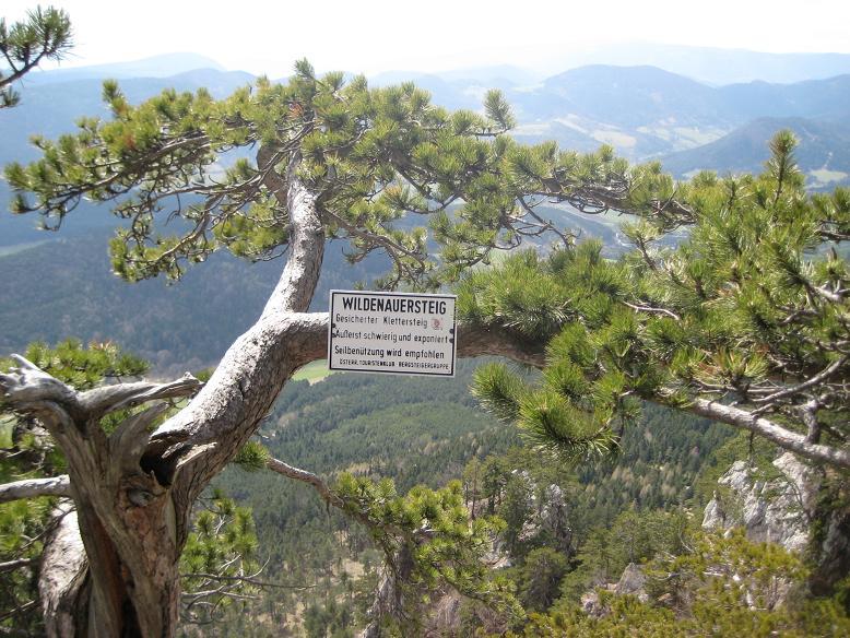 Foto: AbsolutAlpin.at / Klettersteig Tour / Wildenauersteig / Tafel am Ausstieg des Wildenauers / 09.04.2008 13:19:33