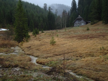 Foto: Wolfgang Dröthandl / Wander Tour / Spazierrunde durch die Walstern bei Mariazell / Feuchtwiese auf dem Weg ins Fadental / 11.04.2016 14:44:03