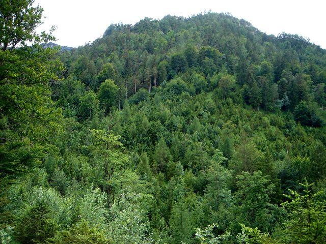 Foto: Manfred Karl / Wander Tour / Dötzenkopf, 1001 m / Der unscheinbare Dötzenkopf - gern besucht und trotz der Bewaldung lohnend. / 06.05.2008 20:40:00